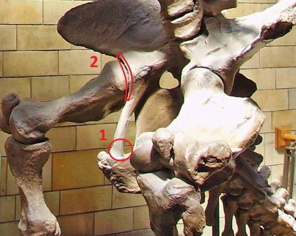 sloth1.jpg