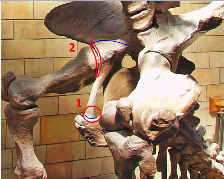 sloth1mrked2.JPG.9dac1e6143ff44985b92a98d112efb47.JPG