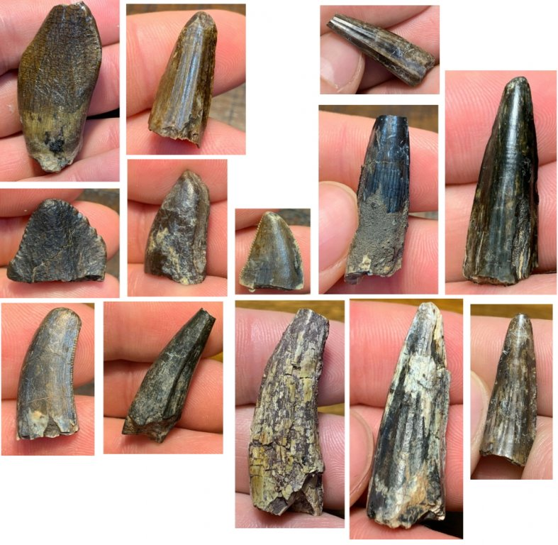 396006620_NigerFossils.thumb.jpg.5187de338724b321e3e190df8984e5f8.jpg