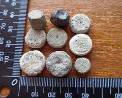 Peski Cyclocrinus stem fragments