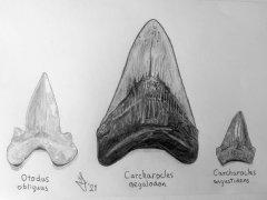 Megatooth Sharks