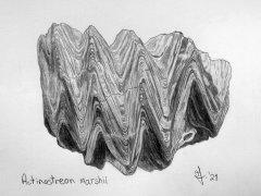 Actinostreon marshii