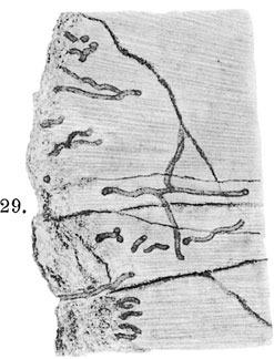 1250467259_Mycelitesossifragusboringsaffectingophthalmosauridichthyosaurtooth.jpg.e7f6edbbb12c5cd3ef2f7c52333d884c.jpg
