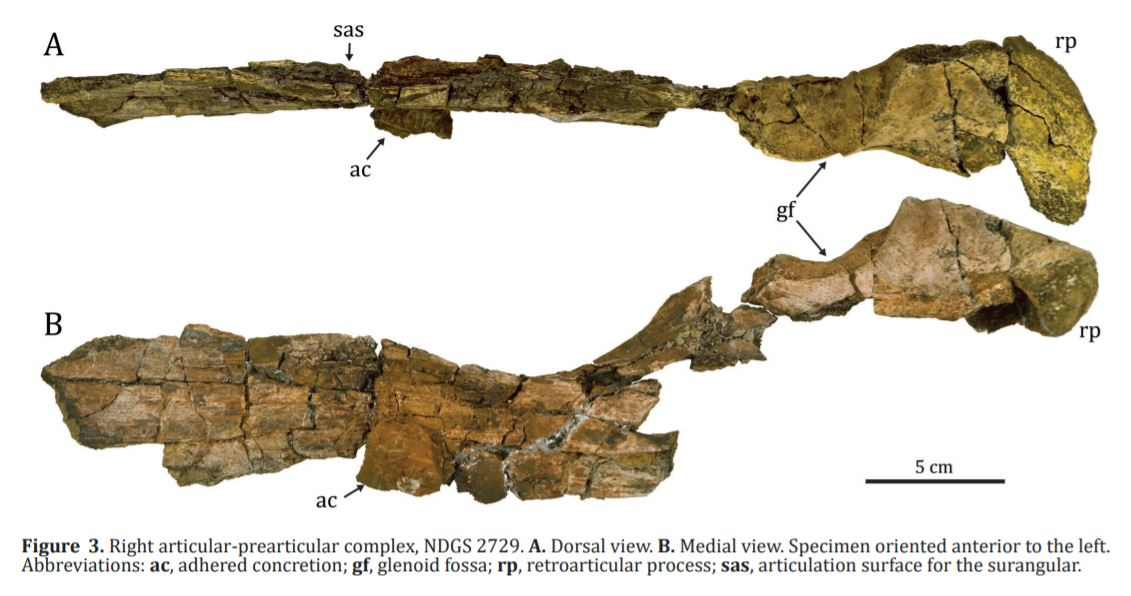517671897_Mosasaurinemosasaur.JPG.e605df062a6d0db70c48c97aa8575407.JPG