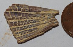 Fish Fin Fragment