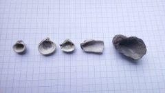 Peski bivalve shells, from inside