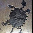 Dinoman28