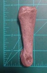 Camelid Phalanx--Side View Measurement