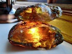 Chiapas Amber (La Quinta Fm./Mazantic Shale, ~22.8-15 Ma)