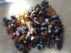 Canadian Amber (Allenby Fm., 52.5-48 Ma)