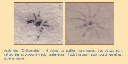 Capture arachnides.JPG