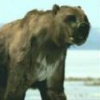 Lake Michigan Fossils: UGH!... - last post by Arctodus