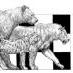 Mammal Carnivor Tooth - last post by crocuta67