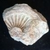Unknown Fossils From Mississippian Formation - last post by zdufran