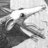 Scarodactyl