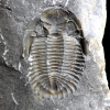 Field Guide To The Devonian Fossils Of New York - Karl A. Wilson - last post by xonenine