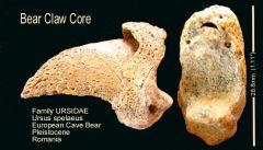 Bear Claw Core