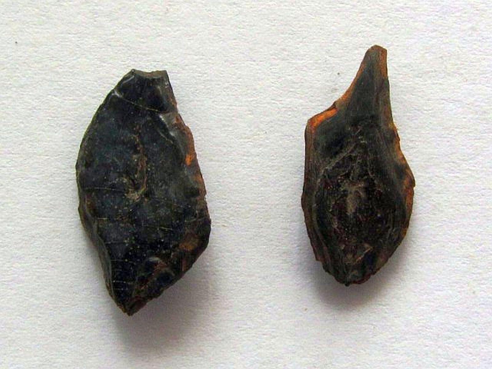 Lepisosteus sp.? (Lacepede 1803)