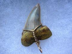 Cosmopolitodus (Isurus) hastalis (Agassiz 1843)