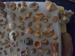 Various Fossils 3