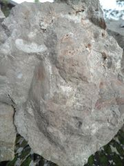 Miscellaneous Fossils in Rocks