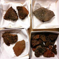 Ammonite Sections