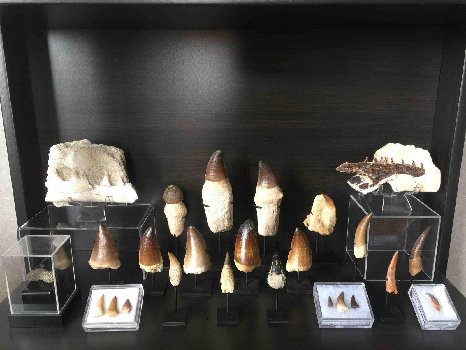 Reptiles & Marine Reptiles collection