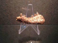 Trematochampsa mandible