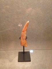 Coloborhynchus - Moroccan Pterosaur Tooth