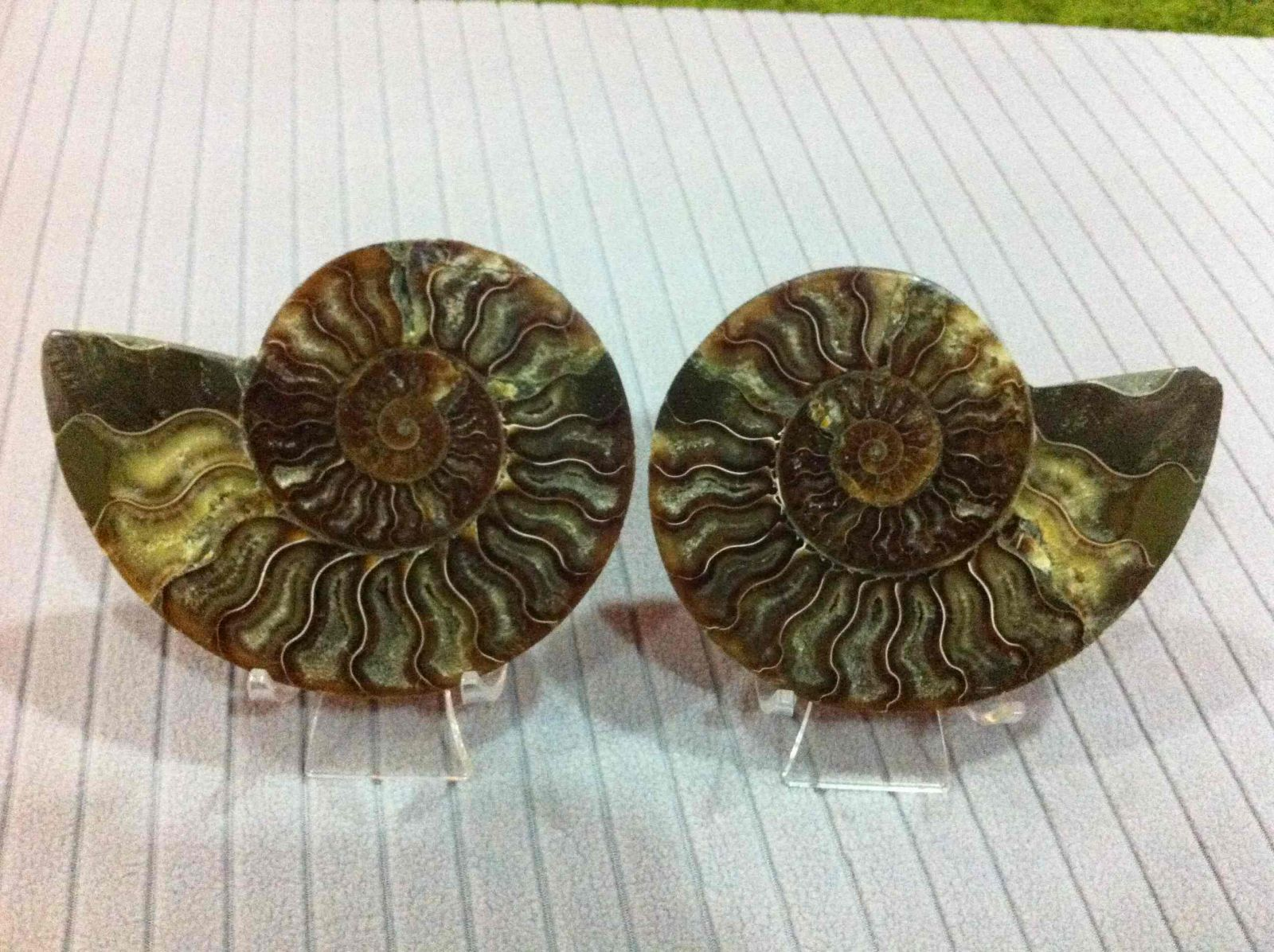 Cleoniceras Ammonite Split 01