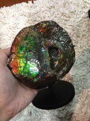 Canadian Ammolite Ammonite (half)