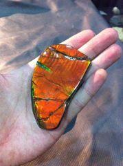Ammolite Free-Form (Rare Double-Sided Iridescence) 01