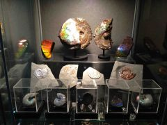 Assorted Ammonites Collection 01