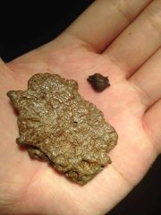 Ankylosaur Tooth & Scute