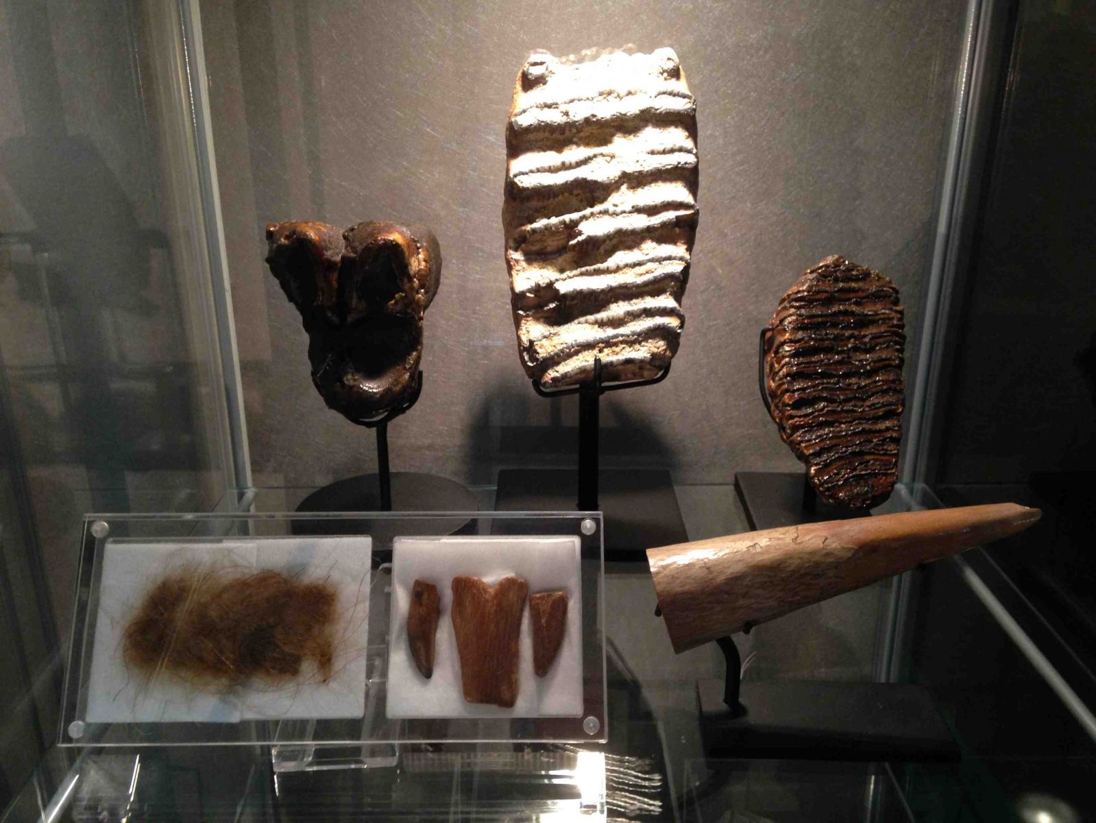 Mammal Fossils Collection