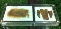 Mammoth Hair & Tusk