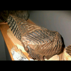 Huge Steppe Mammoth and Striaght tucked elephant molars