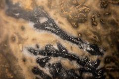 Bryozoa, Graptolites encrusted rock - Fossil 3  Penniretopora?