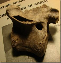Richardson's Landing vertebrae