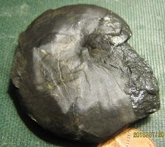 Devonian Goniatite from Madison Co., NY