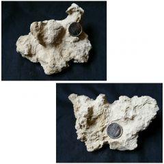 Fossil Driftwood