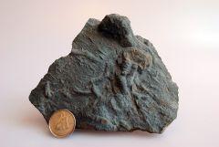 Ichnofossil from Mimico Creek