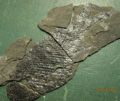 The other side of the last fish fossil