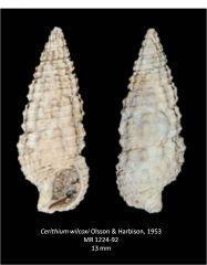 Cerithium wilcoxi