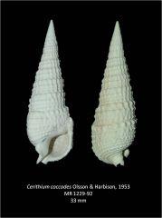 Cerithium coccodes