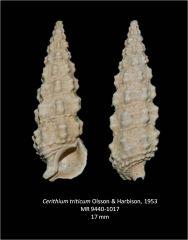 Cerithium triticium