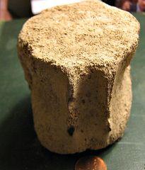 Whale vertebrae from the Calvert Cliffs