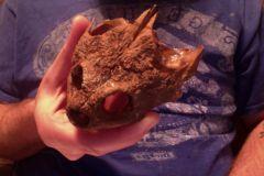 GMR Modern Turtle Skull