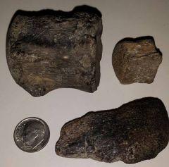 Mosasaur Verts & Mosasaur Bone
