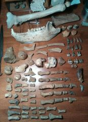 The whole Cave Bear collection.